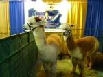 Some friends at the Pennsylvania Alpaca Owners & Breeders Assn booth
